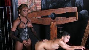 Download Video 2010 Transsexual porn