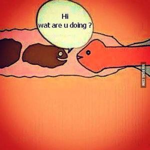 Wrong hole buddy - 9GAG